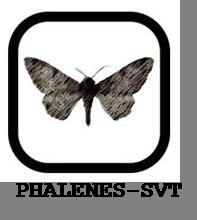 phalenes 1